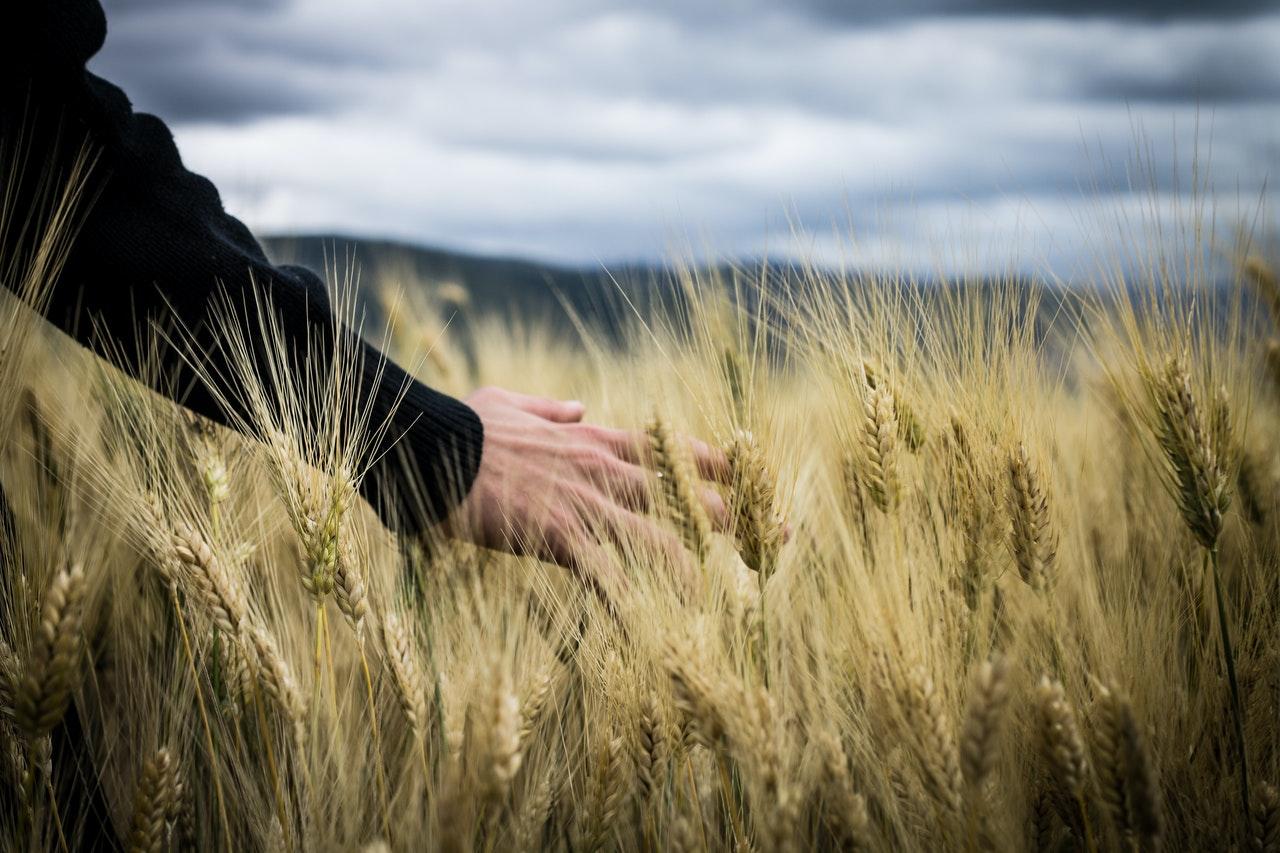 Titelbild: Burnout - Landwirtschaft und Belastungen